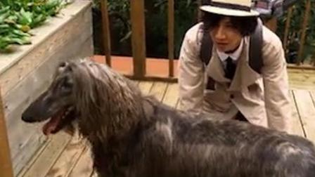 李光洙被羞辱 刘在石调侃撞脸阿富汗猎狗