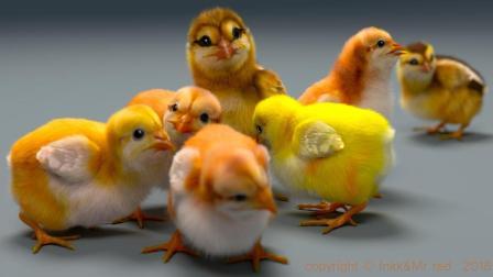 九分钟看完如何制作小鸡鸡(yeti)