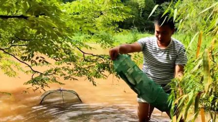 小伙深山发现无人管理的池塘, 一网下去, 竟收获这么多龙虾, 农村这样打野实在太爽了