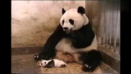 爆笑你见过这些动物打喷嚏的瞬间吗?
