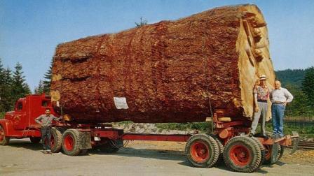 大型机器木材运输木工车床, 这就是科技的力量!