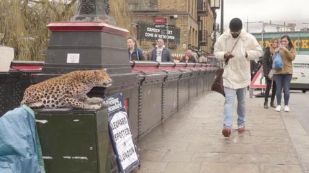 """当在路上看到一只'豹子"""", 路人的反应我看笑了!"""
