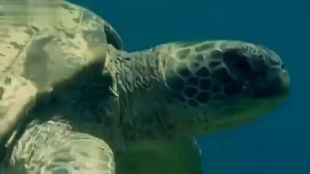 动物的思维: 自然界聪明的动物不胜枚举, 它们真的只是靠本能