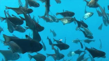 世界上直接建在海里的酒店, 鱼儿与客人隔窗相望