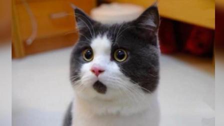 猫咪好不容易把自己的窝拖到二楼, 结果又滚下去了!