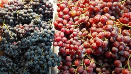 葡萄和提子有什么区别, 为什么价格相差那么大? 今天算长见识了