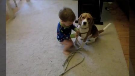 婴儿是狗的主人-有趣的狗和婴儿一起散步