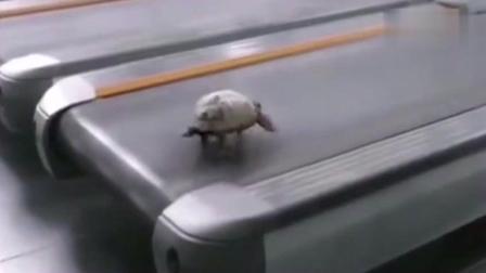看完这只跑步机上的乌龟, 瞬间觉得好惭愧!