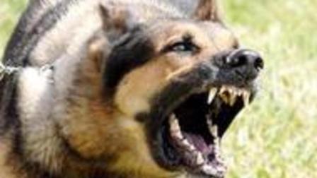 世界最受欢迎的狗狗, 这才是真正的看家狗, 得此狗, 此生无悔!