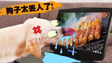 丢人! 吃货宠物的出糗瞬间!