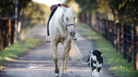 你的狗狗平日都干些什么, 这几只狗狗骑马 溜马样样来, 厉害了我的狗狗