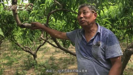 农村这种作物很赚钱, 亩赚5千以上, 全村跟着种, 老农的分析亮了