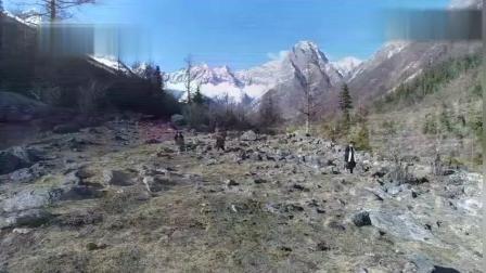 藏族姑娘高原上挖虫草 真是艰辛得不要不要的...