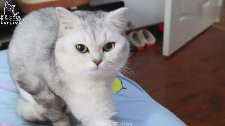千万不要给猫咪听猫叫模拟器, 本来以为没卵用, 结果发情了