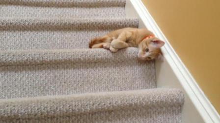 一坨肉滚下楼梯, 仔细一看竟然是猫咪在下楼呀