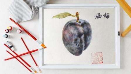 彩铅画基础教程-水果西梅的完整处理技巧