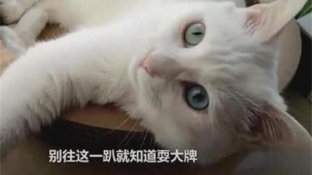 猫咪给我狠狠地抓, 话痨主人真是活该!