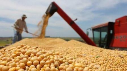 为什么中国要大量进口美国大豆, 而不收购我们国内自己产的大豆?