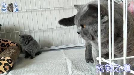 母猫去休息, 公猫独自照看五只猫宝宝, 公猫的表现令人哭笑不得