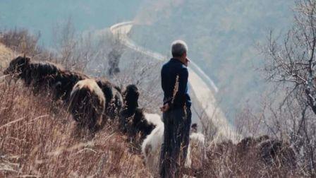 北京的尽头住着一对夫妇,在雪山脚下和30头牦牛共度余生
