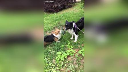 美拍视频: 肉松对果果太好了#宠物#