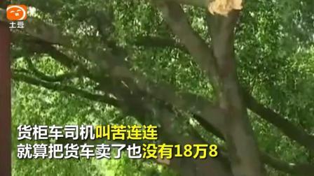 """18万8的天价树枝货柜车刮断""""风水树""""树枝, 村民围堵索要巨额赔偿"""