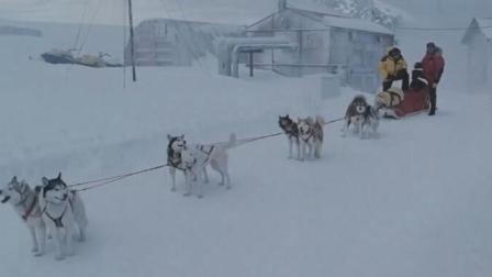 真实事件改编: 狗狗被主人抛弃南极175天, 靠吃这样东西活下来