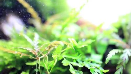 7天造景 沉木水草缸