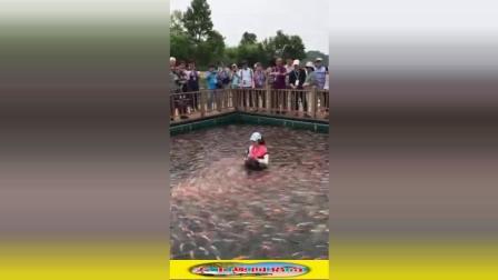 开眼界: 金鱼鲤鱼围着饲养员转圈