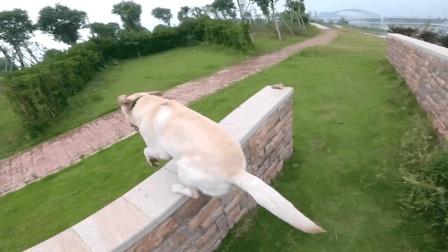 骑车遛狗前一定要保证能控制狗, (未经训练犬只请勿模仿)。