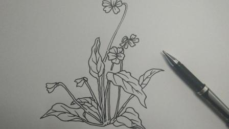 60秒教你画植物花朵, 每日一画!