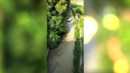 一辆白色轿车冲入河中, 热心群众努力营救安全脱险!