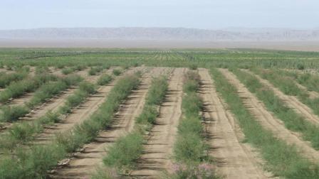 如果把沙漠变成森林, 会有什么后果? 说出来你都不敢相信