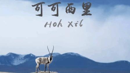 中国最神秘的无人区, 可可西里究竟有多危险? 看完出了一身冷汗