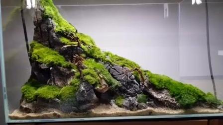 7天造景 苔藓景