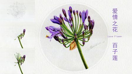 彩铅画基础教程爱情之花-我心中的百子莲2
