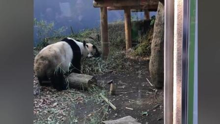 三皇店-#46二货作死搞笑、牛人炫酷碉爆高清视频集锦