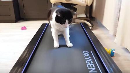 当猫咪走到了跑步机上, 猫咪: 快停下来, 累死喵了!