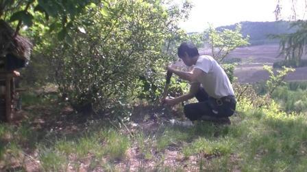 小伙儿清晨带你上山种小菜苗, 长期露营体验野外生活!