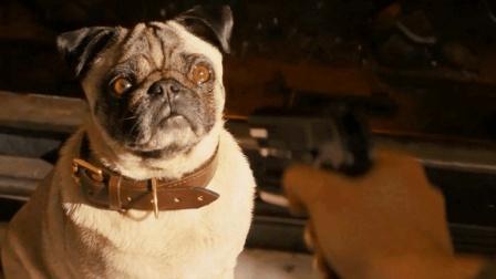 小伙想成为超级特工, 被要求先把自己最心爱的宠物杀死, 太狠了!