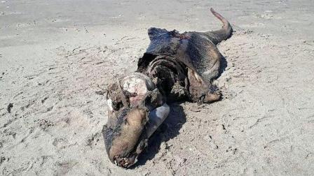 奇秀看点 英海滩发现未知生物遗骸 疑似神秘生物