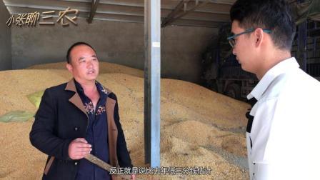 老农分析今年小麦行情, 价格下降有两个原因, 那么粮食是卖还是留