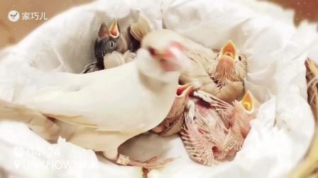 鸟妈妈超生了,喂小鸟的时候,把鸟妈妈忙够呛!