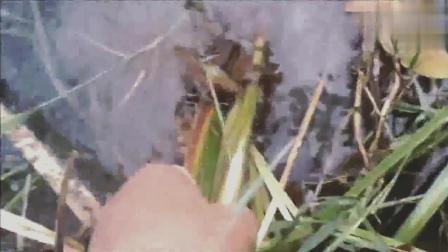 钓鱼池塘里的夜钩, 没想到已经钩住了这么多的鱼!