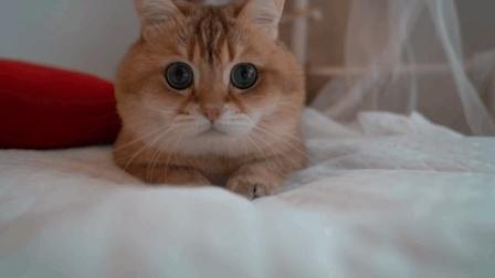 呆萌的猫咪, 你就乖乖卖萌就好啦, 咋好奇心还这么重呢? 啥都要碰一碰