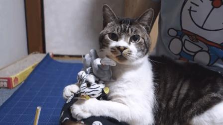 铲屎的! 你把本喵当什么了啊! 本猫咪可不是的可以随意亵玩的哦!