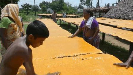实拍印度芒果干制作的过程, 看后, 隔着屏幕都是芒果味!