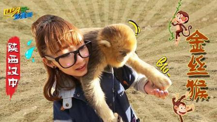 近距离接触野生金丝猴, 一点都不怕人!