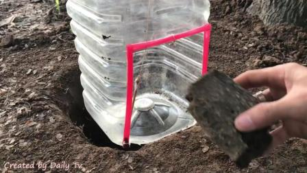 小伙用废旧的瓶子DIY制作简易的捕鸟陷阱, 往地上撒点米稻捉了一只大鸽子, 太有才了!