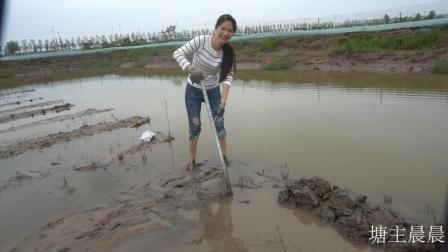 晨晨带着家人将龙虾池塘建设成稻田养虾模式 希望稻谷龙虾双丰收